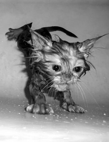 Mokré kočička foto